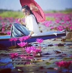 นางสวยเนาะ...หน้าโคตรคม! เหมาะกะชุดไทยจริงๆ  #นางเเบบรับงานอยู่ติดต่อได้ #ชุดสำเพ็ง #ร่มบ่อสร้าง(สั่งซื้อได้) #ทะเลบัวแดง #บัวแดง #อุดรธานี #lotus