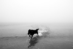 liquid spirit (Roberto.Trombetta) Tags: sea beach playing black white bw blackandwhite canon 6d canon6d sand water fog winter cold wave running run autumn dog landscape seashore shore coast outdoor surreal ghost stunning amazing surfer surf barrel mist misty