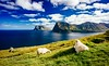 Føroyar - Faroe Islands (PhoenixRoofing164) Tags: landscape lake sea nature travel island clouds cloudscape ocean roof grass green village sunny islands earth panoramic outdoors sheep landmark fjord grassland planet voigtlander faroe wanderlust faroese kalsoy pakdock føroyar 2016 scotland