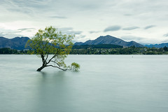 The Tree (stefannik) Tags: wanka tree water longexposure beautiful awesome travel nikon landscape unique nature tourism newzealand