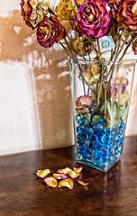 27:365 - Dried Flowers (LostOne1000) Tags: vase bluerocks cy365 3652017 fallingapart flowerpetals stilllife 365the2017edition roses death driedflowers 27365 27jan17 day27365