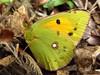 Butterfly 1118 (+450000 views!) Tags: butterfly borboleta farfalla mariposa papillon schmetterling فراشة