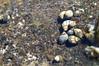 (Mysterious Fetus) Tags: hawaii oahu hanaumabay hanauma bay shell