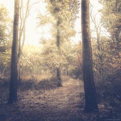 Nel Parco-2 (Roberto Gaudenzi) Tags: parchi alberi boschi