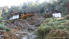 P1100987 Going uphill on rough stony steps we pass some more teahouses (ks_bluechip) Tags: nepal trek dec2016 annapurna abc mbc landruk tolga pitamdeorali pothana