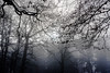 2017-01-02 Ombres et brumes 03 (thierry.lhoest) Tags: noiretblanc black white trees nature fog shadow darkness dark ombres brumes arbres