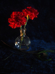 Red And Blue (PrunellaCara) Tags: red black blue stilllife flowers objects glass light vignette