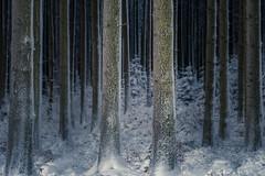 Winterwunderland (sedregh (off for some days)) Tags: eifel winter schnee snow wald forest woods deutschland germany landschaft landscape trees bäume