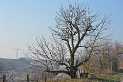 Im Weinberg 6 (fotomänni) Tags: landschaft landscape natur nature naturfotografie naturephotography naturimpressionen natureshots natureimpressions naturephotograps weinberg wingert bäume trees baum tree arbre arbres manfredweis
