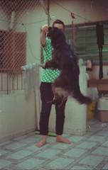 Jumping Ball (a.ninguem) Tags: zenit df300 film filme kodak dog jump bolinha ball