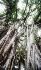 DSC01644 (1)banyon trees vertical _HDR_edit (Lynn Friedman) Tags: hdr favstock nobody vertical tree banyan forest havana park cuba roots canopy filteredlight