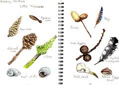 Tiny treasures (Hornbeam Arts) Tags: cones feathers skull acorn snails oakapple