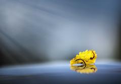 _U7A4097_1 (Robert Björkén (Hobbyfotograf)) Tags: blue autumn orange field yellow leaf dof bokeh minimalism minimalistic depth tone lessismore