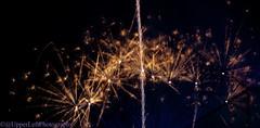 DSC_0608 (UpperLeftPhotography) Tags: seattle longexposure animals outdoors baseball fireworks hiking wildlife sunsets mountrainier mariners kerrypark bluehour pikeplace olympicnationalpark pnw woodlandparkzoo secondbeach bluemoon mlb pcl columbiatower southlakeunion rainiers milb rizalbridge skyviewobservatory upperleftphotography