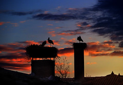 IMG_5994 sunset storks (pinktigger) Tags: sunset chimney italy bird nature italia nest dusk stork cegonha cigea friuli storch ooievaar fagagna cicogne cicogna oasideiquadris feagne