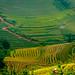 Rice Terrace Fields 2