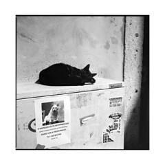 black cat white cat • lisboa, portugal • 2015 (lem's) Tags: white black portugal cat lost chat noir nap lisboa lisbon ad annonce bronica blanc perdu lisbonne sieste zenza