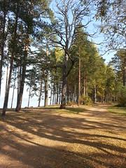 The Gulf  of  Finland .St.Petersburg . (presteza777) Tags: trees sea samsung stpeterburg thegulfoffinland golfodefinlandia golfodifinlandia