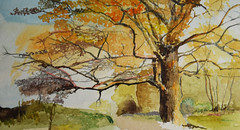 Autumn changes (amanda.parker377) Tags: trees autumncolours watercolourpainting essexcountryside cotmanwatercolours