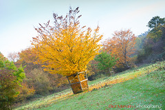 Hatfield_Forest-56 (Eldorino) Tags: park uk morning autumn trees nature forest sunrise landscape countryside nikon britain centre jour hatfield bishops stortford essex hertfordshire stanstead hatfieldforest