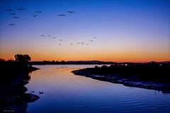Flying into the Bay (luqmac) Tags: california sunset sky usa oakland birdsinflight oaklandca urbanlandscape eastoakland eastbayregionalparkdistrict sanleandrobay martinlutherkingjrregionalshoreline damonslough garretsonpoint nikond7100 garretsonpointtrail