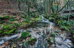 Vaguada (Perurena) Tags: trees naturaleza nature water rio forest river agua rocks arboles stones bosque pontevedra rocas piedras vegetación moaña efectoseda riodasfragas