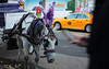 IMG_6790 (Benedetta Nocentini) Tags: calesse cavallo taxi nyc central park