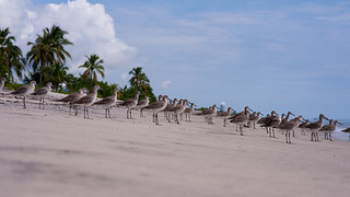 Birds at the beach Playa Blanca Panama