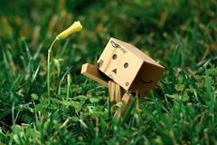 Wandering Danbo (thinduck42) Tags: danbo danboard toy actionfigure panasonic fz1000 remoteflash flower dmwfl360l macro