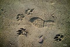 Footprints (Kym.) Tags: andalucía andalusia beach day4 dog dogwalking footprint nerja sand spain walk walkingadog