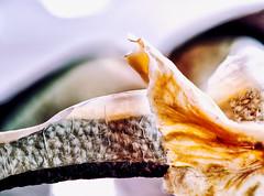 It's A-Peeling: Free Radicals (Silke Klimesch) Tags: macromonday itsapeeling hmm radish peel vegetable macro macrophotography raphanussativusniger erfurterradish blackspanishradish blackspanishround surreal abstract coolbutwhatthehellisit brassicaceae crucifers mustardflowers mustardfamily antioxidant kreuzblütengewächse makrofotografie olympus omd em5 mzuikodigitaled60mm128macro itsapeelingtome schwarzerrettich rettichschale
