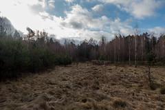 Is it winter yet? (kondex vs mechagodzilla) Tags: winter wind cloud cloudy clouds sun forest tree trees meadow woods poland polska lubelskie janów lubelski lubelszczyzna