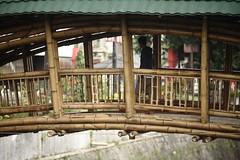 Bamboo bridge in Solo (Architecture Sans Frontières Indonesia) Tags: puentedebambú puente bambú bamboobridge bamboo bridge jembatanbambu jembatan bambu kretegpring kreteg pring kalipepe solo pedestrian sustainable infrastructure infrastruktur bamboobiennale ballustrade railing architecturesansfrontièresindonesia asf asfid