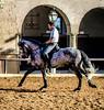 Doma VI (|Raquel|) Tags: cordoba doma caballos caballo jinete andalucia españa spain horse horses animal animals race horserace south hdr beautiful grey young youngphotographer caballerizas