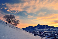 Trees on the hill in the sunset (辛同學) Tags: china 內蒙古 壩上 winter snow sunset cloud trees village cold d4s nikon landscape mongolia 2470mm 雪地 山丘 天太永 冬天 日落