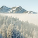 white forest (7d_alex) Tags: nature mountains snow winter swiss pilatus neverstopexploring fog cold trees forest