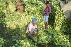 Vegetable market (ashik mahmud 1847) Tags: bangladesh d5100 nikkor pattern people man working vegetable shop market light shadow