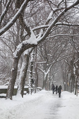Wintry way 2 (marktmcn) Tags: winter snow scene snowscape wintry way route under trees snowfall distance people group walking through central park manhattan new york city dsc rx100