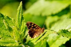vlinder (Omroep Zeeland) Tags: vlissingen