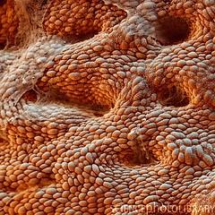 FA15_Stomach Lining_700x (Studio Jonas Coersmeier) Tags: germany corpus medizin magen reutlingen verdauung ventriculus