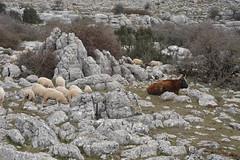 2015-02-07 10.58.59 (Reydelpro) Tags: españa trekking andalucia malaga senderismo torcal antequera 2015 espaa reydelpro
