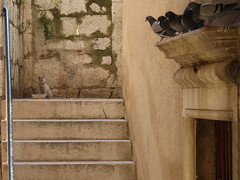 Croatia - peeping pigeons (ashabot) Tags: cats birds croatia medieval dubrovnikcroatia medievalcities