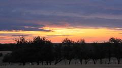 Coucher de Soleil Lorrain (yom1) Tags: sunset red cloud france nature clouds canon landscape eos rebel evening soleil cow quiet cows country coucher arbres soire 1855 nuage nuages paysage soir lorraine campagne calme coucherdesoleil meuse vaches xsi coutryside tranquille paisible eos450d 450d efs1855is 1855is rebelxsi kissx2 foucheres fouchres fouchresauxbois yom1