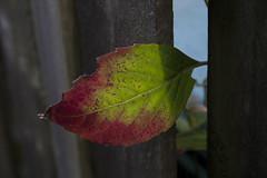 Floriade_251015_50 (Bellcaunion) Tags: park autumn fall nature zoetermeer rokkeveen florapark
