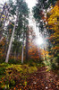 Bavarian Fall (JØN) Tags: autumn fall leaves forest germany bayern deutschland bavaria nikon 1735mmf28d eibsee d700
