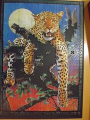 Leopard - Clementoni - 1000 Teile (magihabbi) Tags: tiere puzzle leopard 1000teile clementoni