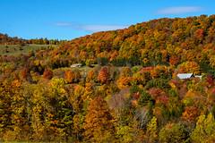 Peak Foliage (jim sonia) Tags: fall vermont 8x10 foliage