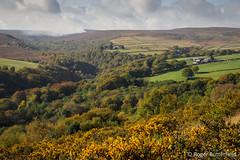 Upper Ewden Valley (Roger B.) Tags: autumn unitedkingdom peakdistrict sheffield darkpeak ewdenvalley gorse southyorkshire ewden