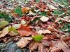 #Güz #Yağmurları #Eskipazar #Sırt (ferdiavci37) Tags: güz sırt eskipazar yağmurları