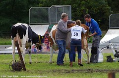 IMGP5530-040 (hugomekersfotografie) Tags: delta hugo dieren crv koeien boerderij 2015 boeren veehouderij brownswiss roodbont veeteelt tractoren rundvee zwartbond rijkse streeknieuws hugomekersfotografie fokveedageibergen
